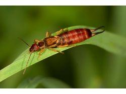 Домашние насекомые фото