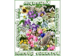 Картинки цветы для фотошопа