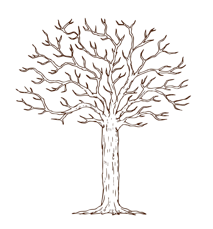 также картинка дерева для распечатывания изоляции скатов основном