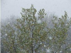 Фото зима снег идет