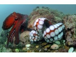 Изучать подводный мир