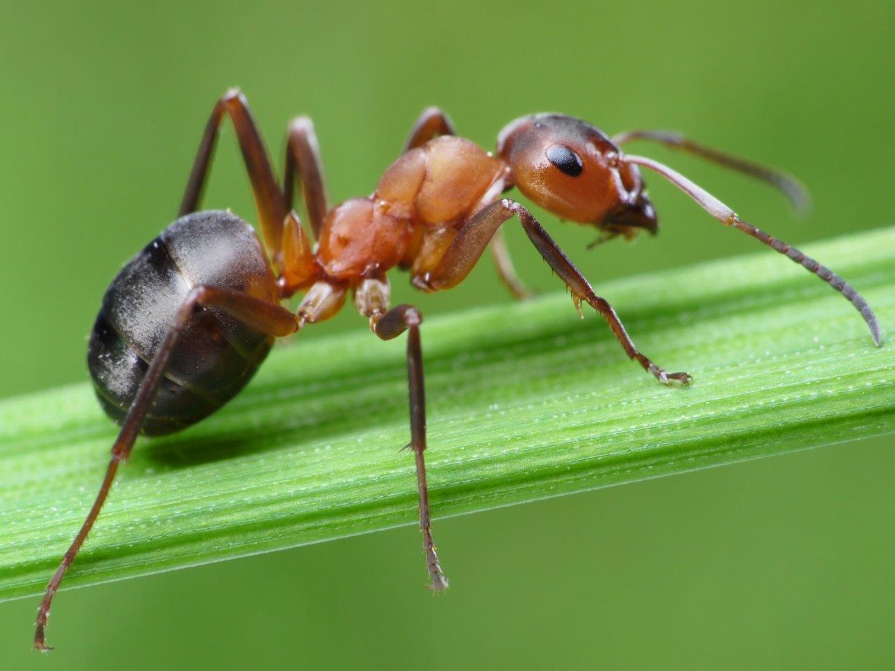 муравей фото или картинки создан для