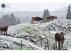 Картинки зима в швейцарии