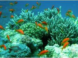 Красное море подводный мир-доклад