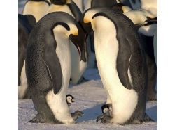 Прикольные картинки  с пингвинами